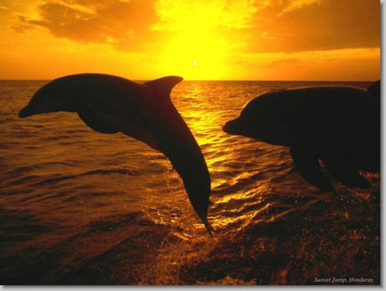 En güzel çekilmiş ödüllü manzara resimleri - 36. resim