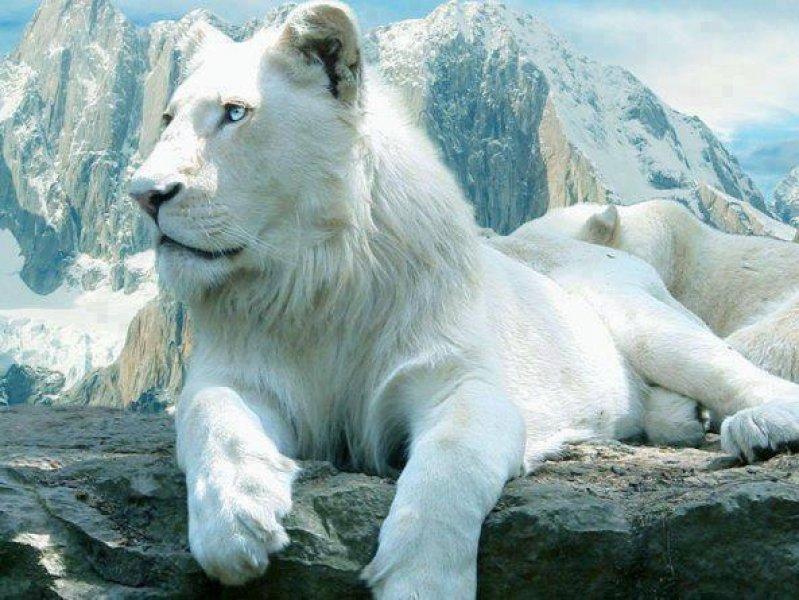 Dünyanın En Pahalı 10 Hayvanı