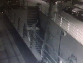 Esenyurt'ta köpeğe pompalı tüfekli saldırı anı kamerada