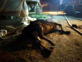 Denizli'de besihanede yangın çıktı: 22 büyükbaş hayvan telef oldu
