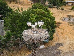 Tunceli'deki 'Kuşçu' köyünün leylek sakinlerinin sayısı artıyor