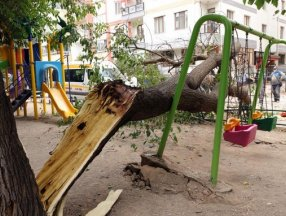 Eskişehir'de çocuk parkındaki dut ağacı, salıncakların üzerine devrildi