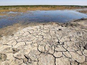 Kanada'da aşırı sıcaklar, tarım ürünlerini vurdu