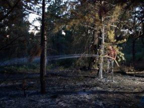 Uşak'ta meydana gelen orman yangını 5 dönümlük alanı kül etti