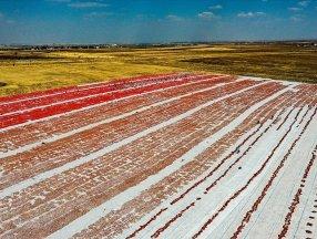 Karacadağ'da kurutulan domateslerden renkli kareler