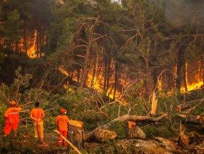 Orman yangınlarının 8. gününde son durum tablosu