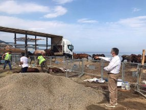 Artvin'de tır parkında ölüme terk edilen onlarca at tedavi altına alındı