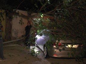 İstanbul'da dut ağacı arabanın üzerine devrildi