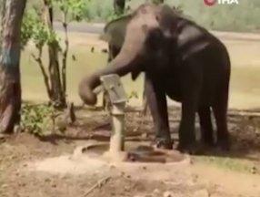 Hindistan'da bir fil, su içmek için pompa kullandı
