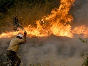 Antalya'da yanan ormanların yerine 100 milyon fidan