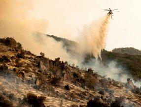 Kaliforniya'daki yangınlar dünyanın en büyük ağaçlarını tehdit ediyor