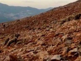 Tunceli'de anne ve yavru ayılar koyunlara saldırdı