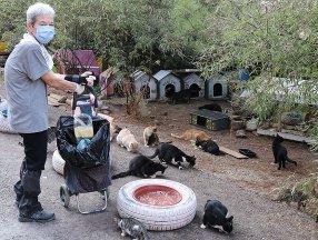 İzmir'de yaşayan emekli kadın günde 200 kediyi besliyor