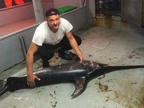 İstanbul Boğazı'nda 60 yıl sonra kılıç balığı görüldü