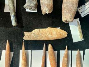 İzmir'de 8 bin yıl öncesine ait aslan ve panter kemikleri görüldü